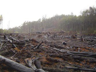 Гибель и вырубка лесов как экологическая проблема?