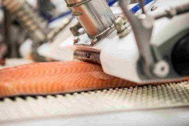 Оборудование для переработки рыбы и морепродуктов