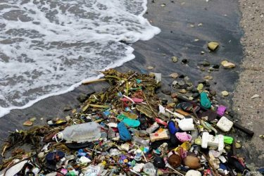 Интересные факты о загрязнении окружающей среды